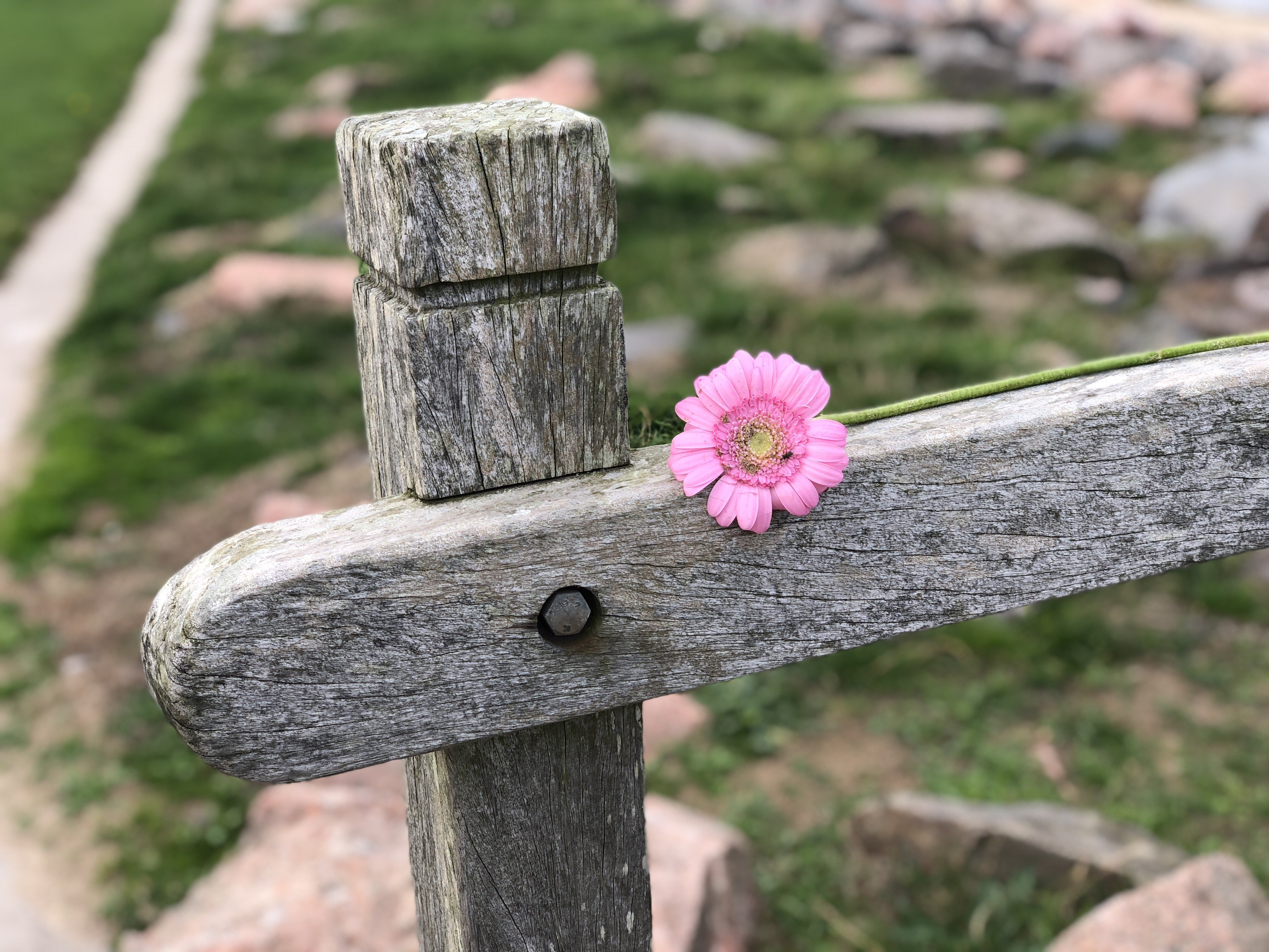 a flower on a fence